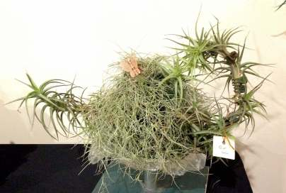 Air Plant cosy